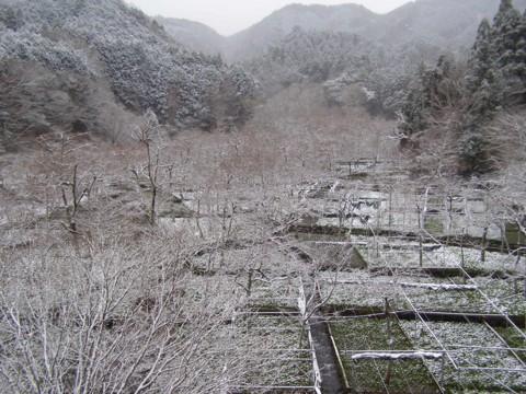 雪の山葵田_f0043750_2245115.jpg