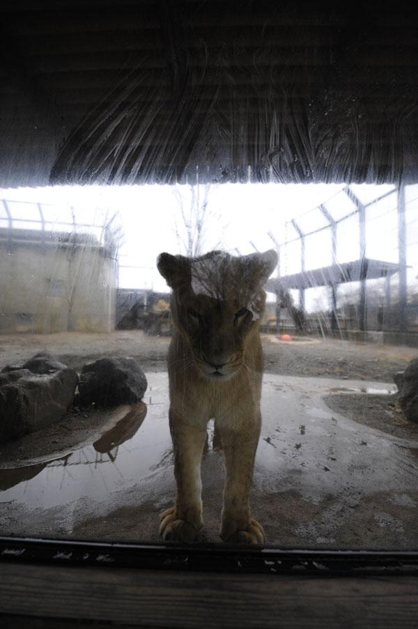 逆動物園_b0023856_19202652.jpg