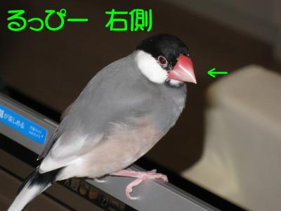 b0158061_214971.jpg