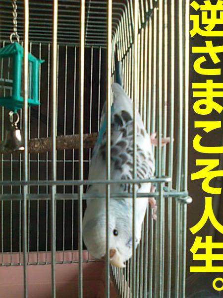 b0053867_1546581.jpg