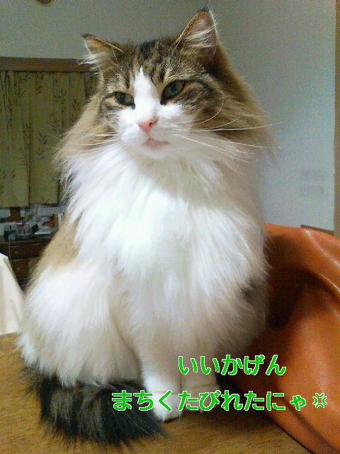 b0066487_14481475.jpg