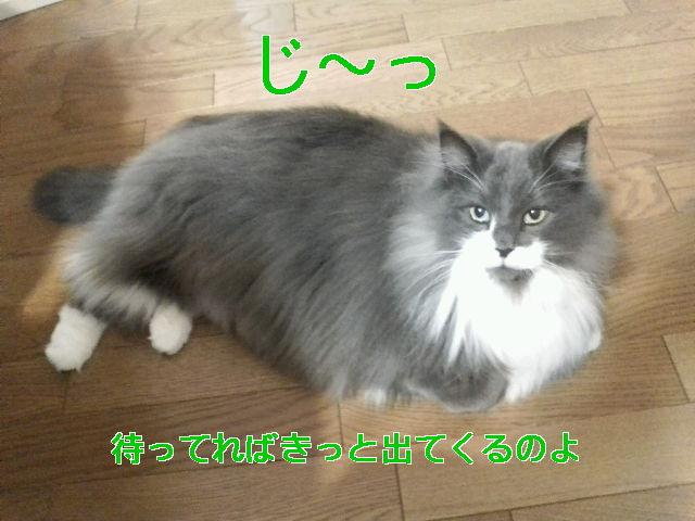 b0066487_14481493.jpg