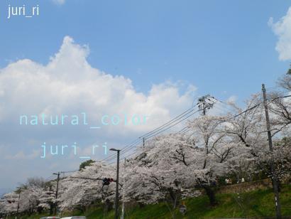 c0063808_1411540.jpg