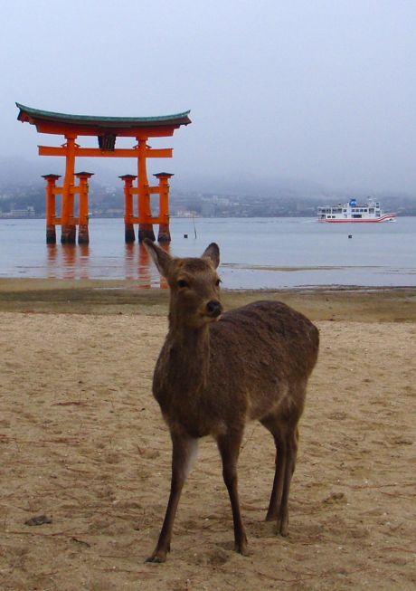 鹿は「ミュゥ〜〜♡」と鳴くんよ。_a0037910_11254598.jpg