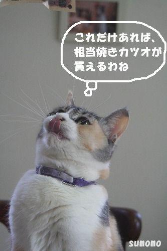 f0063729_8491310.jpg