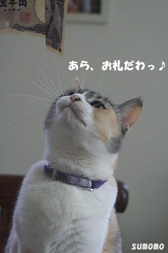 f0063729_849517.jpg