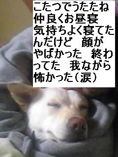 f0195543_230277.jpg