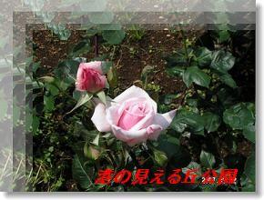 b0154148_21204510.jpg