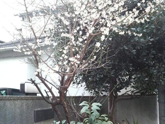 梅に鶯_c0185356_1356328.jpg
