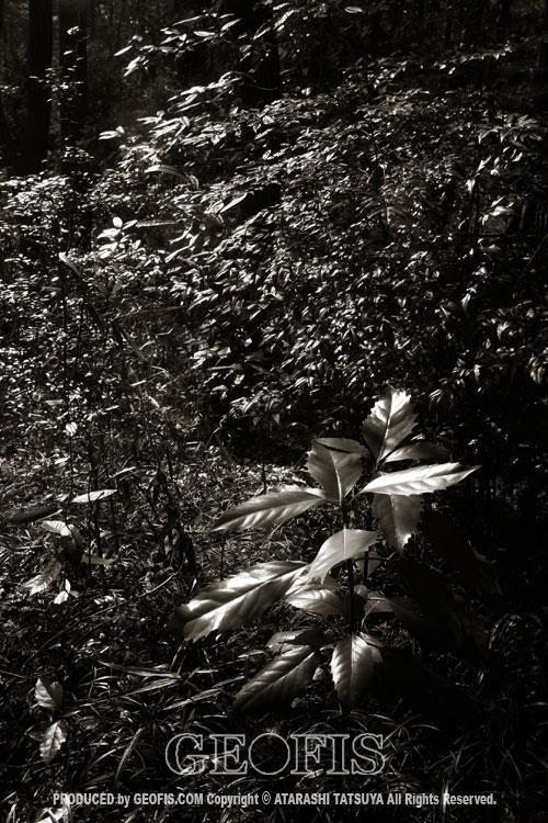 草木然2009 智光山公園_b0007284_16503745.jpg