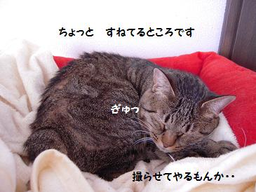 c0139488_16582815.jpg