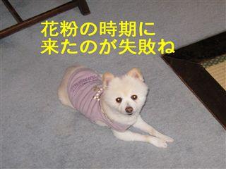 e0121589_18174977.jpg