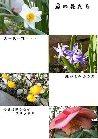 f0007689_1750587.jpg