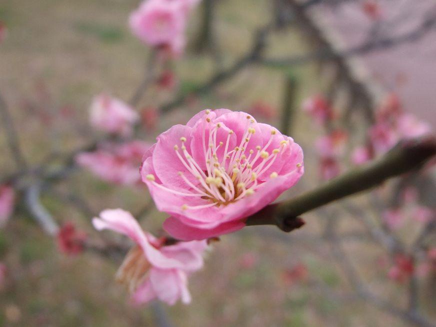 Aiha Higurashi - New Life