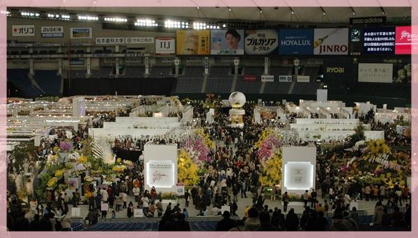 東京ドーム 世界蘭展へ_c0051105_20554474.jpg