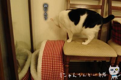 鏡の国の猫_e0031853_16234585.jpg
