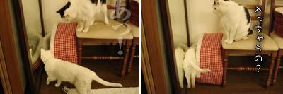 鏡の国の猫_e0031853_16242470.jpg