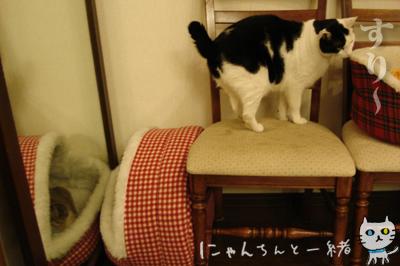 鏡の国の猫_e0031853_1624334.jpg