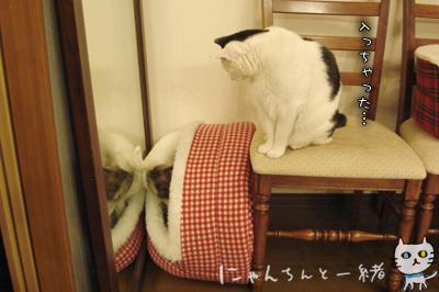 鏡の国の猫_e0031853_16254177.jpg