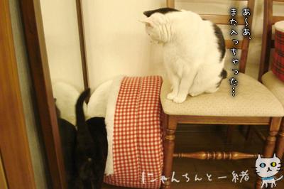 鏡の国の猫_e0031853_1626163.jpg