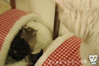 鏡の国の猫_e0031853_1627362.jpg