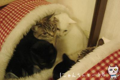 鏡の国の猫_e0031853_16273992.jpg