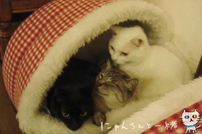 鏡の国の猫_e0031853_1628302.jpg