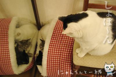鏡の国の猫_e0031853_162945.jpg