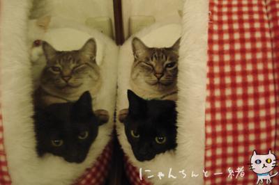 鏡の国の猫_e0031853_1630223.jpg