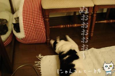 鏡の国の猫_e0031853_1630394.jpg