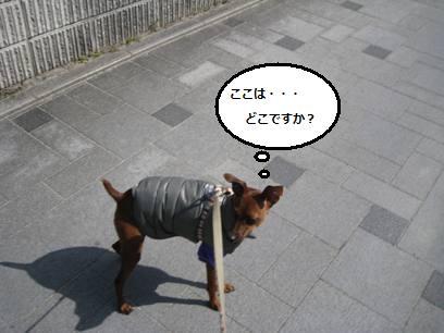 d0150161_16243132.jpg