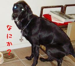 b0003270_1865727.jpg