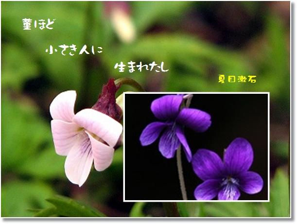 c0037200_1653631.jpg