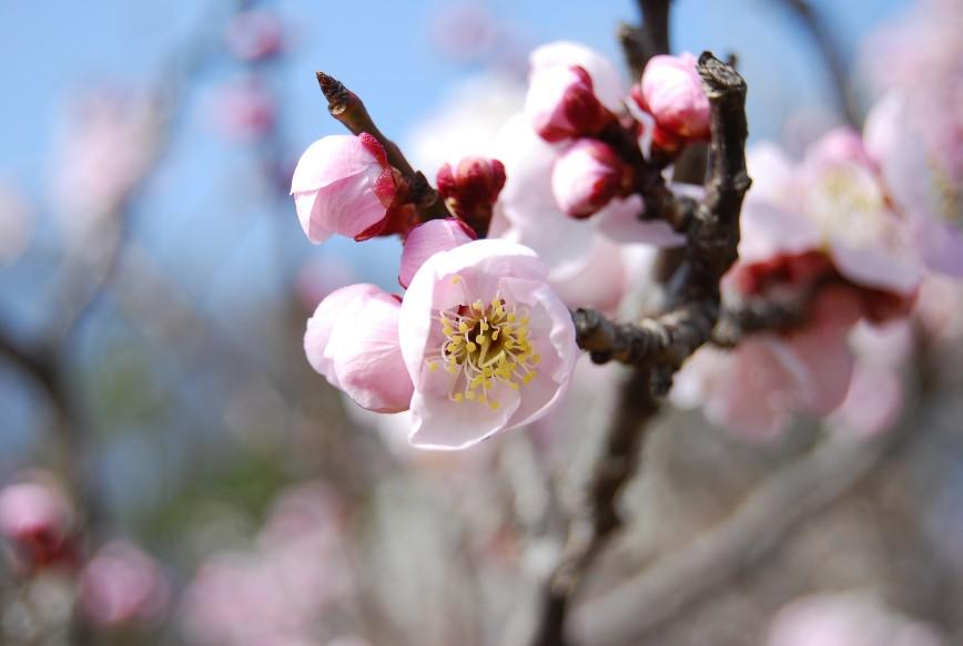 薬師池公園梅林 2月15日_f0101201_22483432.jpg