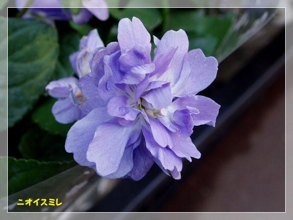 c0051107_0534980.jpg