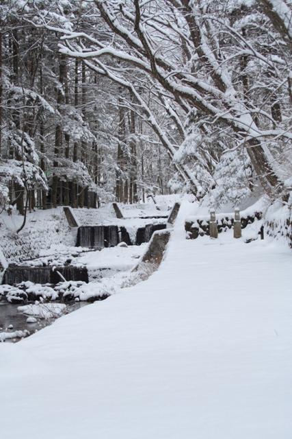 雪に包まれて_f0091207_2071672.jpg