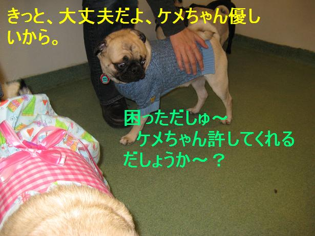 c0132537_1631322.jpg