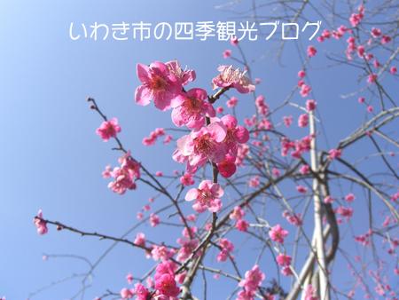 f0105342_12474656.jpg
