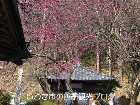 f0105342_12491961.jpg