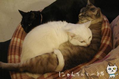 今夜も猫盛り_e0031853_15383951.jpg