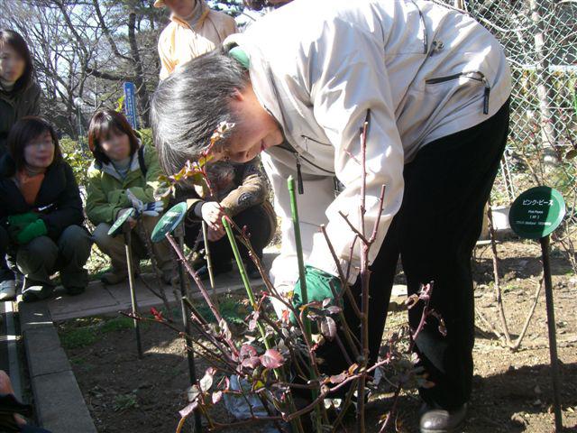 野村先生の駒場バラ会向けミニ講習_a0094959_1513401.jpg