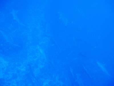 ディーズパルス沖縄 3泊4日 与那国島ツアー_d0113459_1759349.jpg
