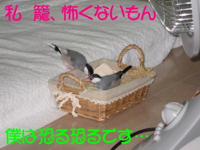 b0158061_081726.jpg