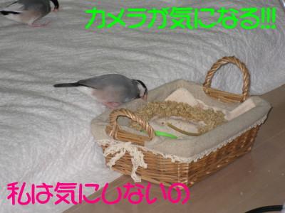 b0158061_095271.jpg