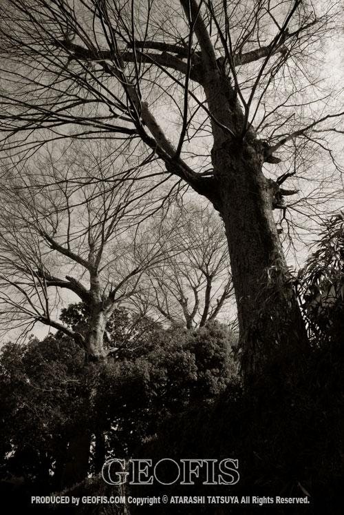草木然2009 日高市女影_b0007284_15383116.jpg