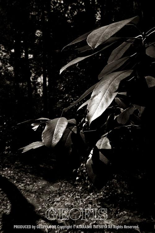 草木然2009 智光山公園_b0007284_16385723.jpg