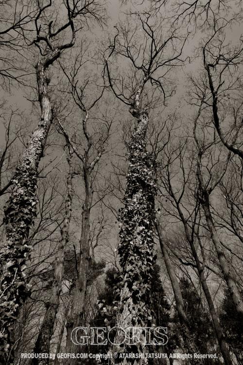 草木然2009 智光山公園_b0007284_16391826.jpg