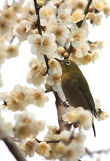花から花へ_d0151003_1125991.jpg