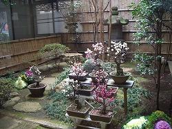江戸からの和菓子(6) 船橋屋 くず餅_c0187004_19202383.jpg