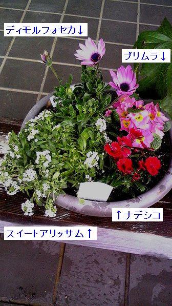 b0035808_15565030.jpg
